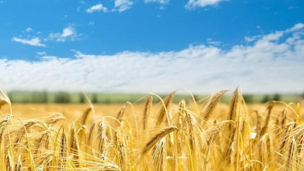 Gıdada üretim ve tedarik planlamaları...