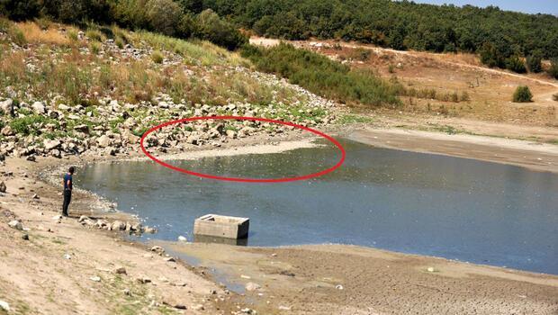 Bursa'da Hasköy Göleti'nde tedirgin eden görüntü... Binlercesi kıyıya vurdu