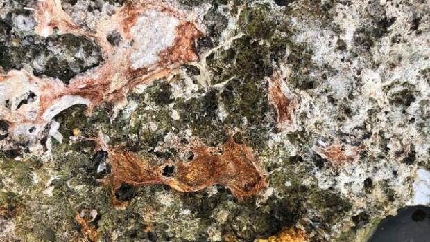 Son dakika haberleri... Milyonlarca yıl önce meydana gelmişti! Sular çekilince ortaya çıktı
