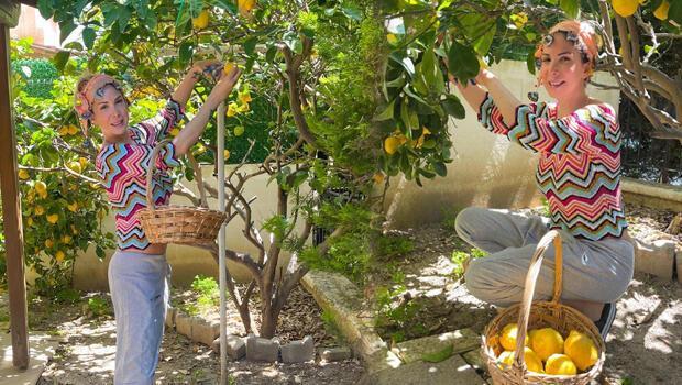 Kolları sıvadı bahçeye girdi Hasat zamanı...