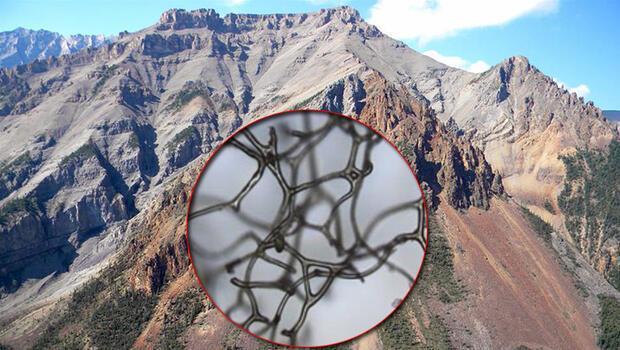 Tarihin en büyük keşiflerinden biri: Tam 890 milyon yıllık!