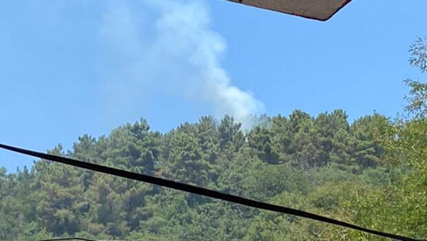 Son dakika: Beykoz'da ormanlık alanda yangın paniği