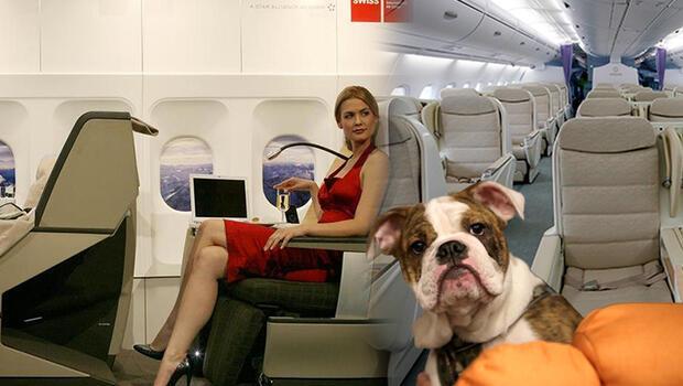 Köpeği için 'business class'ı kapattı!