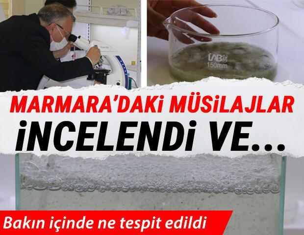 Marmaradaki müsilajlar incelendi Bakın içinde ne tespit edildi...