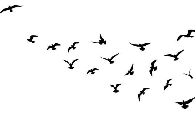 Amazon'da böcek yiyen kuş türleri yok olma tehlikesi altında