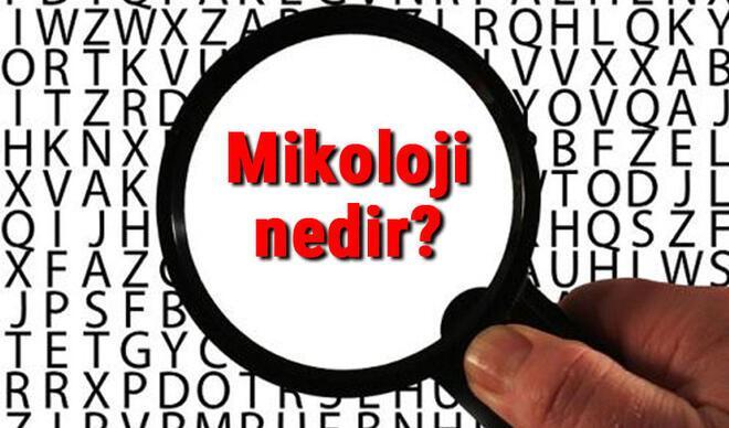Mikoloji nedir ve neyi inceler? Mikoloji (Mantar Bilimi) hakkında kısaca bilgiler