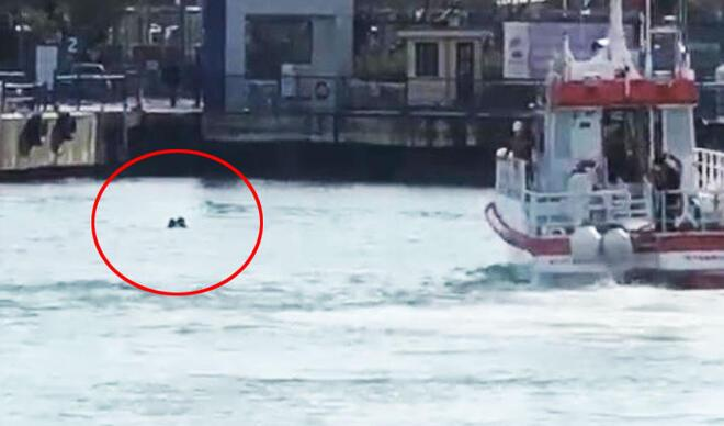 Kadıköy-Adalar vapurunda hareketli dakikalar! Hayatını Amerikalı turist kurtardı