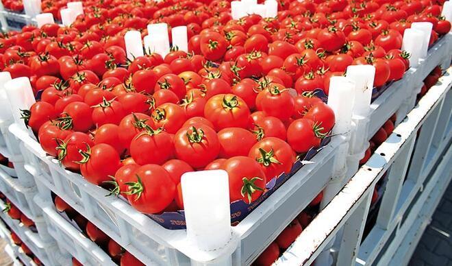 Yaş meyve sebzede ihracat lideri Mersin