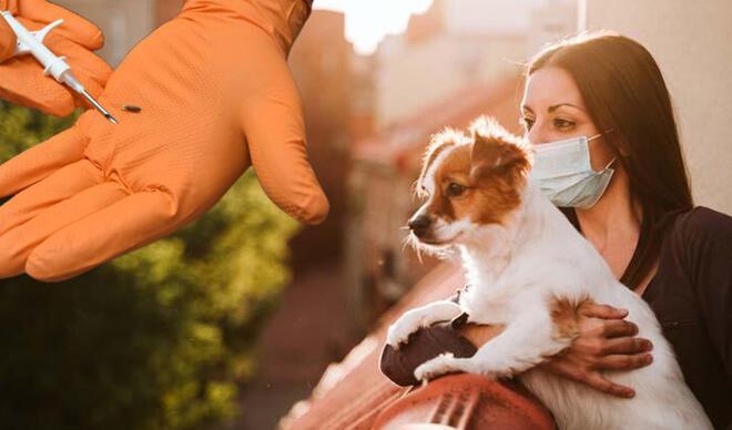 Resmi Gazete'de yayımlandı, artık zorunlu! Evcil hayvan sahipleri dikkat: Cezası var