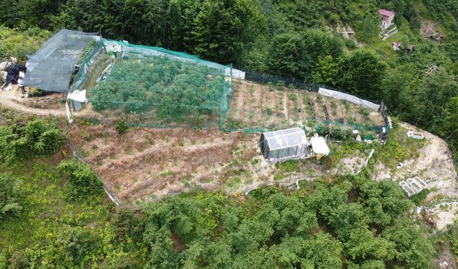 Trabzon'da likarba, Rize'de likapa, Giresun'da mavi yemiş... Yıllık 100 bin TL kazandırıyor