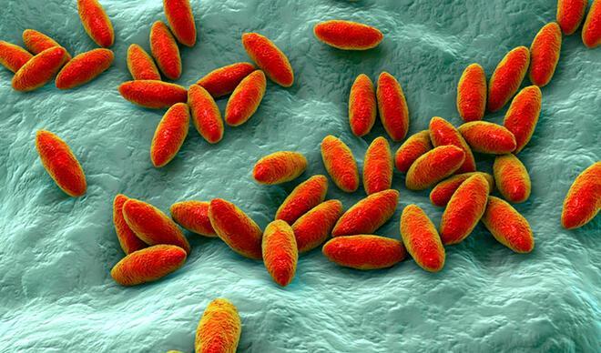 Brusella hastalığı nedir, nasıl bulaşır? Brusella belirtileri, tedavisi ve dikkat edilmesi gerekenler