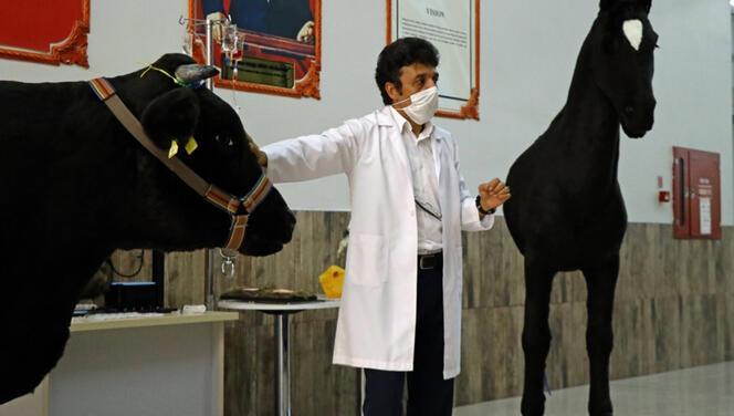 Akademisyenler silikon kullanarak kara sığır ile at tasarladı