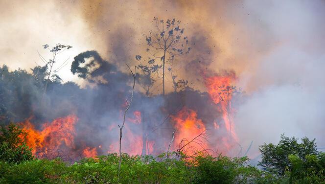 Kontrol altına alınanlar ve devam eden orman yangınları: Hangi illerde yangın çıktı? Yangın raporu paylaşıldı