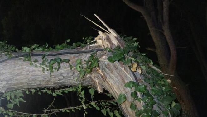 Antalya'da kır düğününde 'ağaç' devrildi!