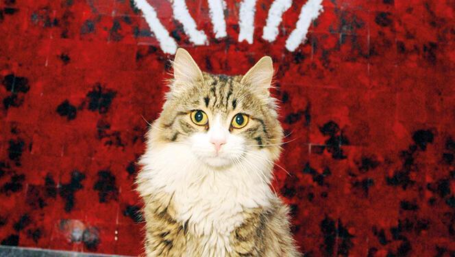 CHP'nin Genel Merkez'le yaşıt kedisi Şero iyileşti