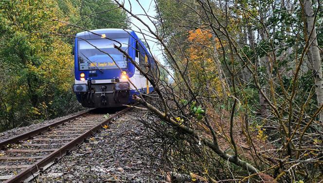 Fırtınada üzerine ağaç düşen makinist hayatını kaybetti