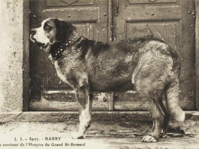 İnsanlık tarihindeki kahraman köpekler