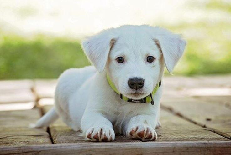 Rüyada köpek görmek ne anlama gelir? Rüyada köpek ısırması ve köpeğin ısırdığını görmenin anlamı