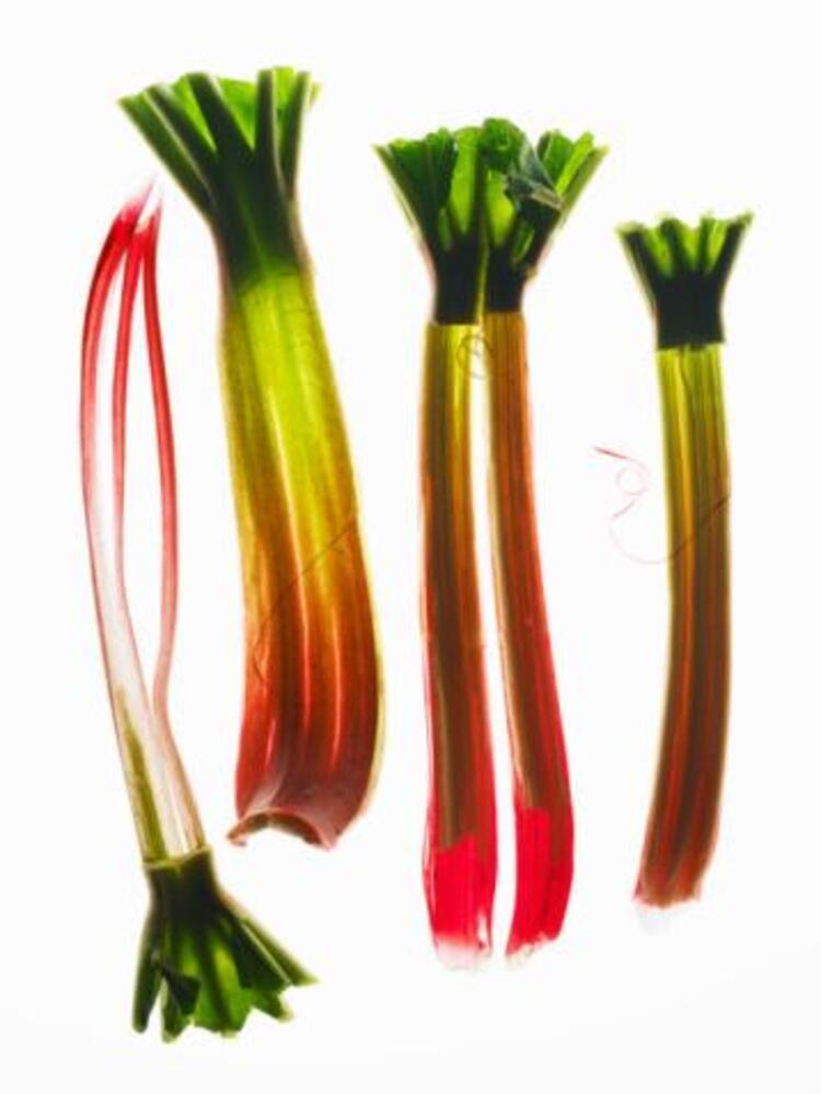 Rhubarb (uçkun-yayla muzu)