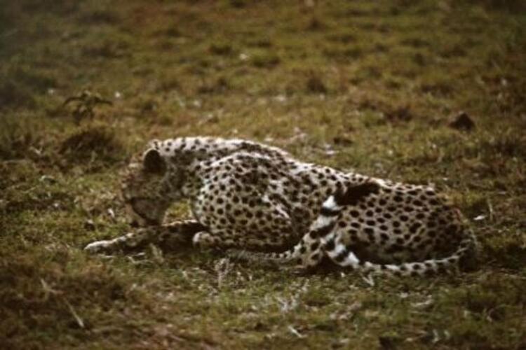 Vahşi hayvanlar çok saygılı