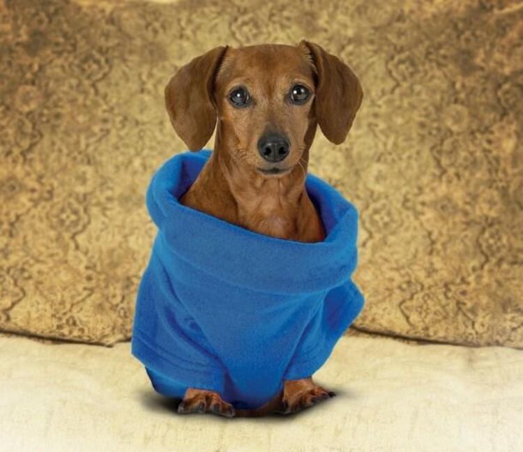 Köpekler için snuggie: