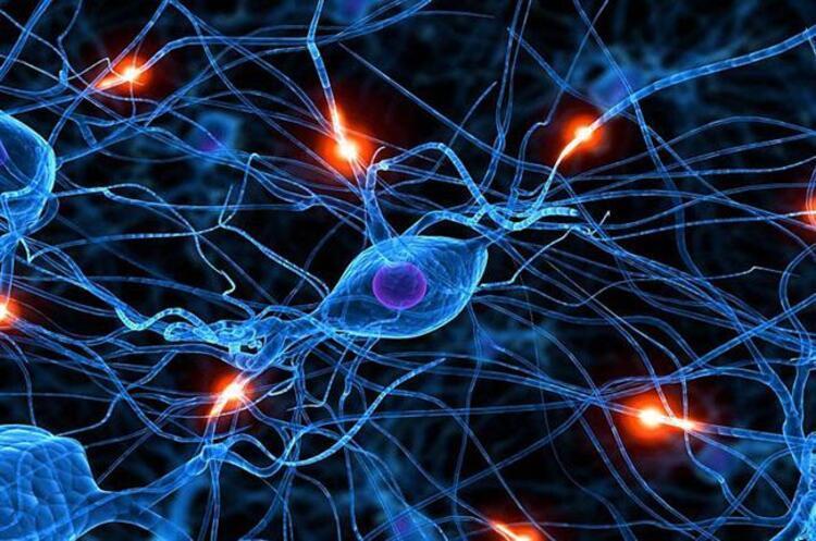 insan beyni ile ilgili görsel sonucu