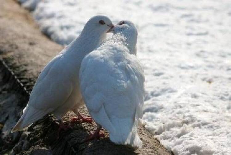 Kuşlar gerçekten ıslanmaz mı