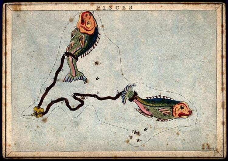 Balık: