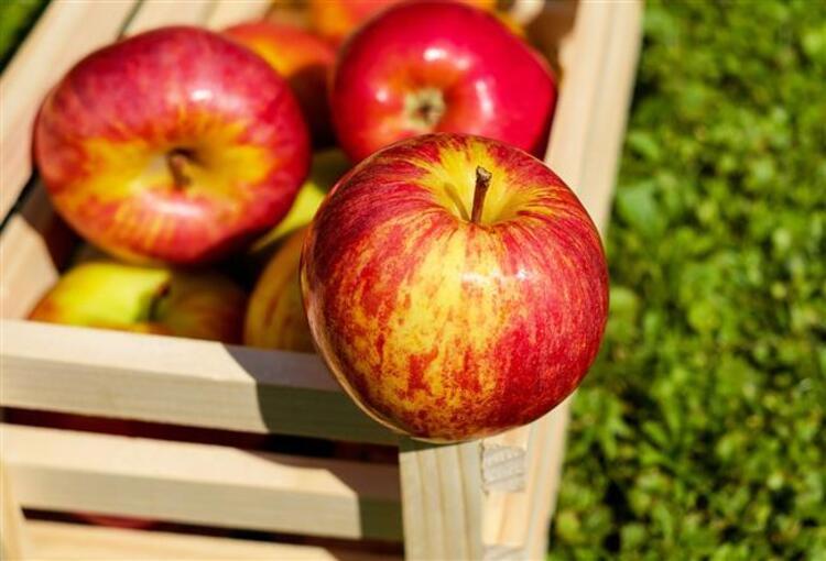 Kanser kalkanı elma