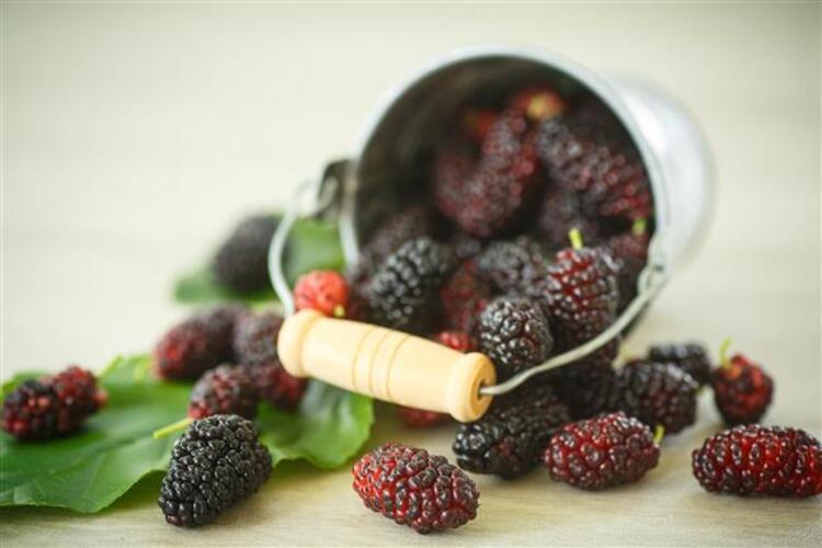 Hem lezzetli, hem zahmetsiz, hem de çok faydalı Otantik bir lezzet olan karadut, yaz aylarının en gözde meyveleri arasında yer alıyor. Karadut lezzetiyle çok seviliyor, soyma derdi olmadığı için de çokça tüketiliyor. C,K ve E vitaminleri bakımından zengin olan karadutun faydaları her derde şifa oluyorİşte yazın efsane lezzetlerinden biri olan karadutun 6 muhteşem faydası…