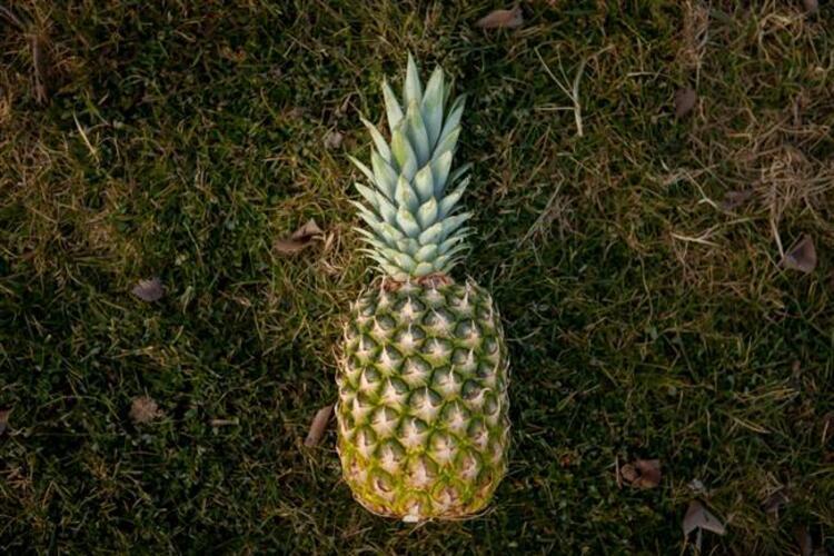 Taylan Kümeli bir antioksidan deposu olan Ananas meyvesinin vücuda ve rahatsızlıklara etkisini ise şöyle sıralıyor: