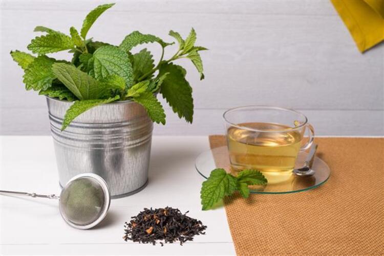 Melisa çayı: