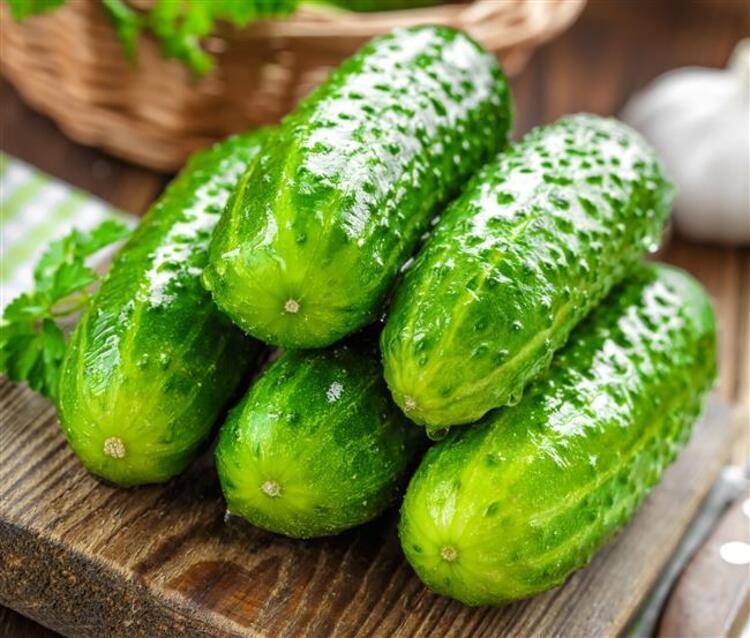 Salatalık: