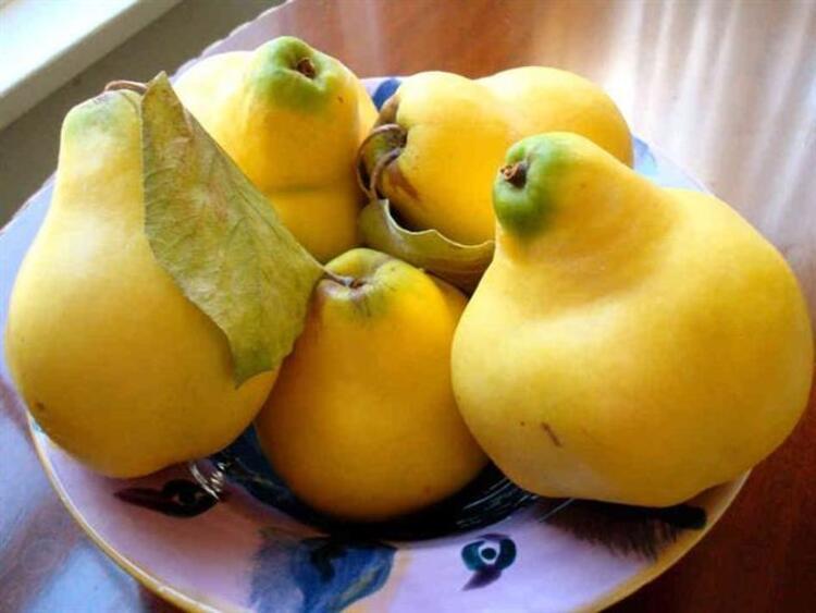 Soğuk kış mevsiminde bağışıklık sistemini güçlendirmede meyvelerin elbette ki payı çok büyük. Ayvanın A, B, C vitamini ve potasyum bakımından zengin yapısıyla kanserden bağırsak rahatsızlıklarına, eklem ağrılarından öksürüklere kadar birçok hastalığa iyi geldiğini söyleyen Beslenme Uzmanı Ulaş Özdemir, mucizevi meyve ayvanın faydalarını anlattı.İŞTE AYVANIN MUHTEŞEM FAYDALARI...