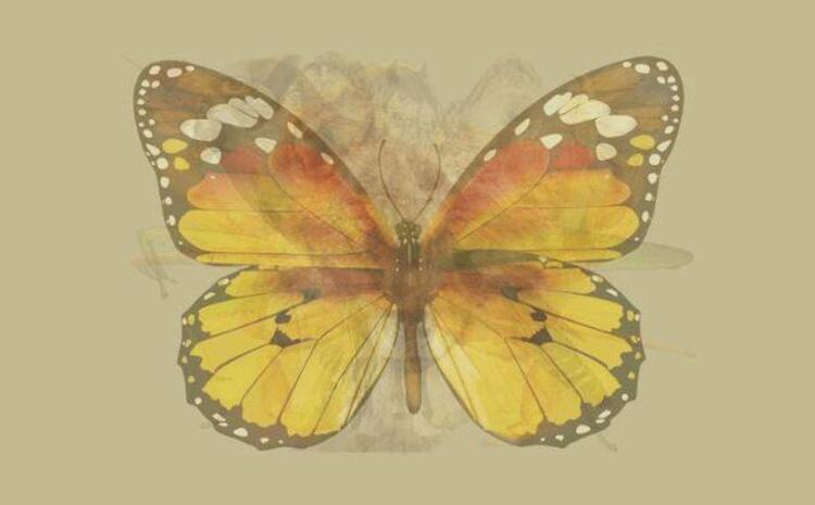 İlk önce kelebeği gördüyseniz...