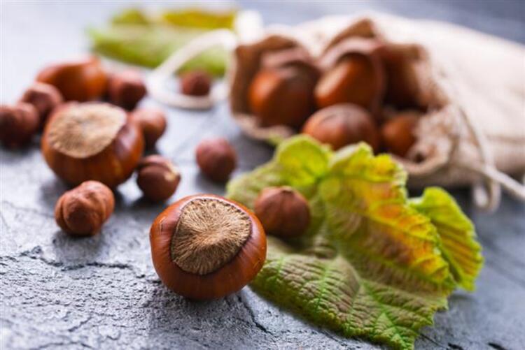Kavrulmamış fındıklar, kavrulmuş fındıklara oranla iki kat fazla antioksidan içerir. Bu nedenle fındık alırken çiğ (kavrulmamış) olmasına özen göstermeliyiz diye konuşan Beslenme ve Diyet Uzmanı Ayça Güleryüz, çiğ fındıkla gelen 10 faydayı anlatarak önemli uyarılar ve önerilerde bulundu.İşte çiğ fındıkla gelen 10 muhteşem fayda...