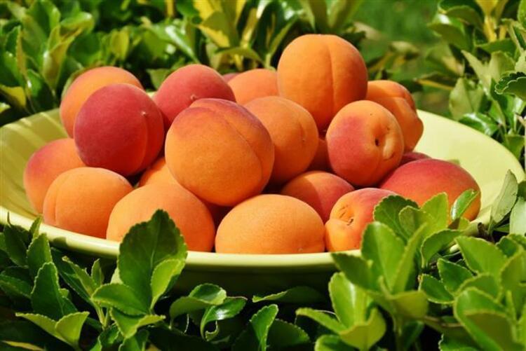 """Yaz meyveleri içerisinde turuncu-sarı rengiyle öne çıkan kayısı, vitamin ve mineral deposu olmasının yanı sıra zengin posa içeriğiyle de karşımıza çıkıyor. İçeriğindeki A, C, E vitaminleri ile demir, magnezyum, kalsiyum ve fosfor kayısıyı sağlık açısından önde gelen besinlerden biri kılıyor. Beslenme ve Diyet Uzmanı Melike Şeyma Deniz """"Meyvelerin olumlu etkilerinden faydalanabilmek için porsiyon kontrolü olmazsa olmaz. Kayısı için porsiyonu 4 kayısı olarak düşünebiliriz. Düşük kalorisi ile göze çarpan meyvelerden biri olan kayısının 1 porsiyonu ortalama 50 kalori civarında"""" dedi, kayısının faydalarını anlattı.Leziz yaz meyvesi kayısının 8 önemli faydası için tıklamaya devan edin..."""