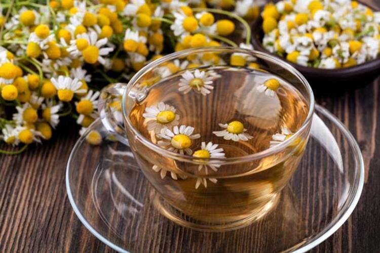 Papatya çayının tüketilmemesi gereken durumlar: