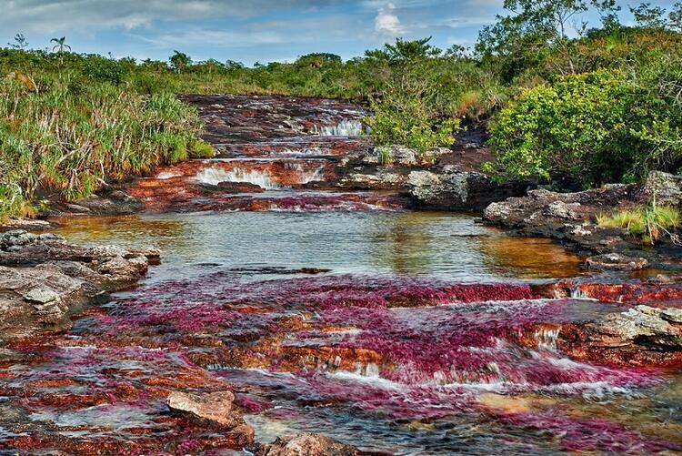 13- Cano Cristales, Beş Rengin Nehri, Kolombiya
