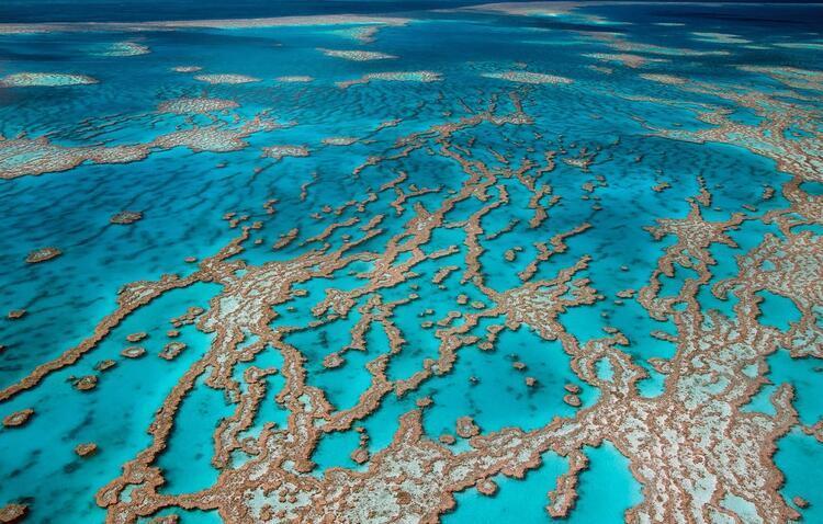 7- Büyük Set Resifi (Great Barrier Reef), Avustralya