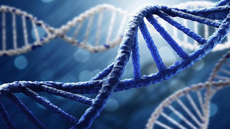Kök hücrelerin yalnızca istenilen organa yerleşmesi sağlandı