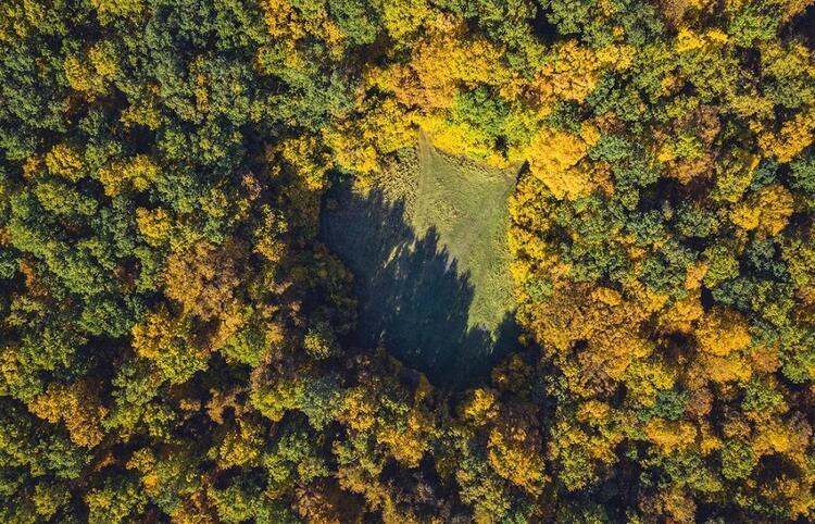 Hoia Ormanı (Pădurea Hoia) / Romanya