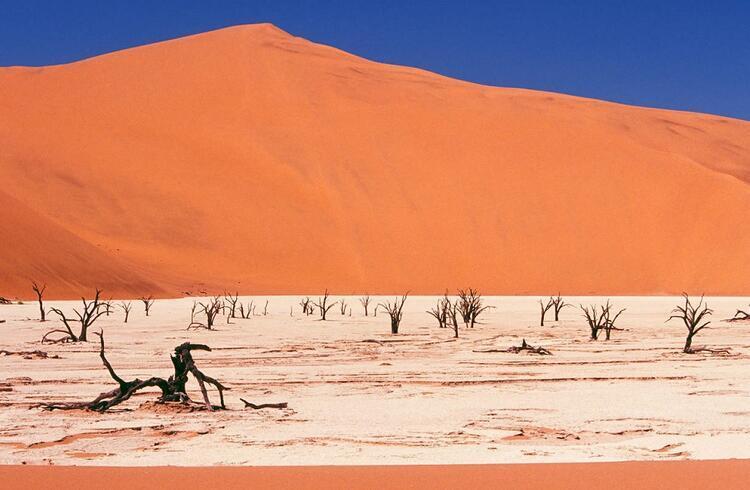 Görenleri şaşkına çeviriyor: Dead Vlei / Ölü Vlei (Namibya)