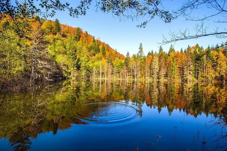 Türkiye'nin en güzellerinden: Karagöl Tabiat Parkı / Artvin-Borçka
