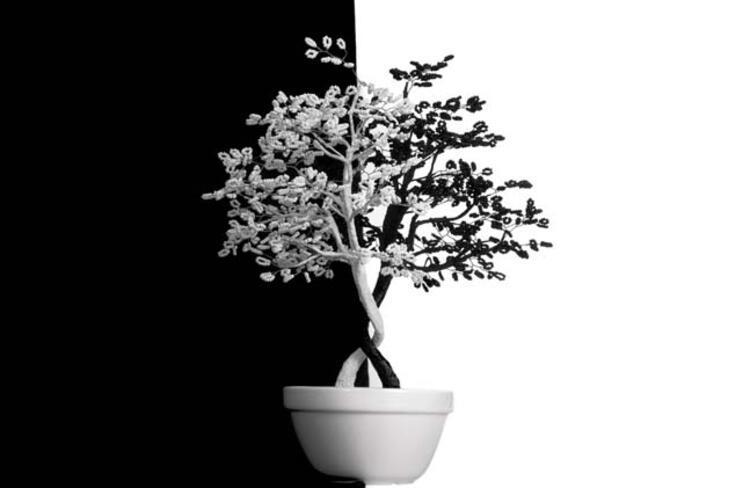 Yin Ağaç