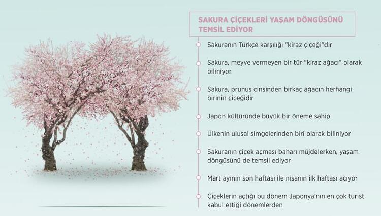 Sakura çiçekleri yaşam döngüsünü temsil ediyor