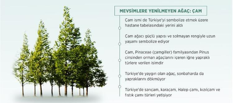 Mevsimlere yenilmeyen ağaç: çam