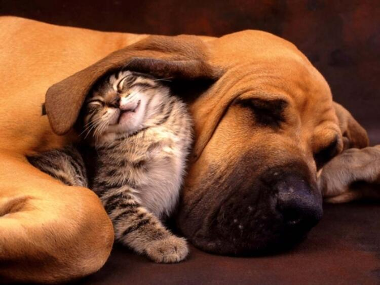 Yanlış: Evdeki kedi veya köpeği uzaklaştırmak gerekir