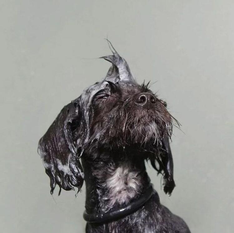 Köpeklerin ıslak ve köpüklü halleri