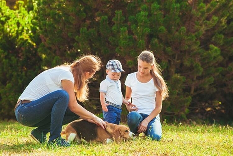 Evcil hayvanlar çocuğun bilişsel gelişimine katkı sağlıyor